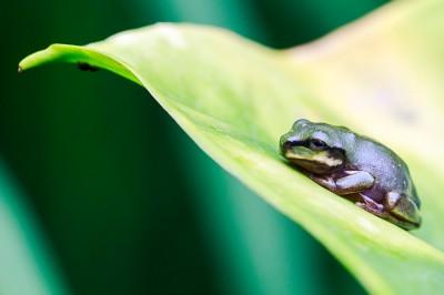 Macro Photography - Frog